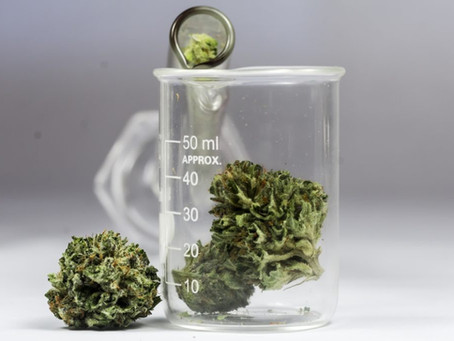 Cannabis Science: a Degree we've all been waiting for!