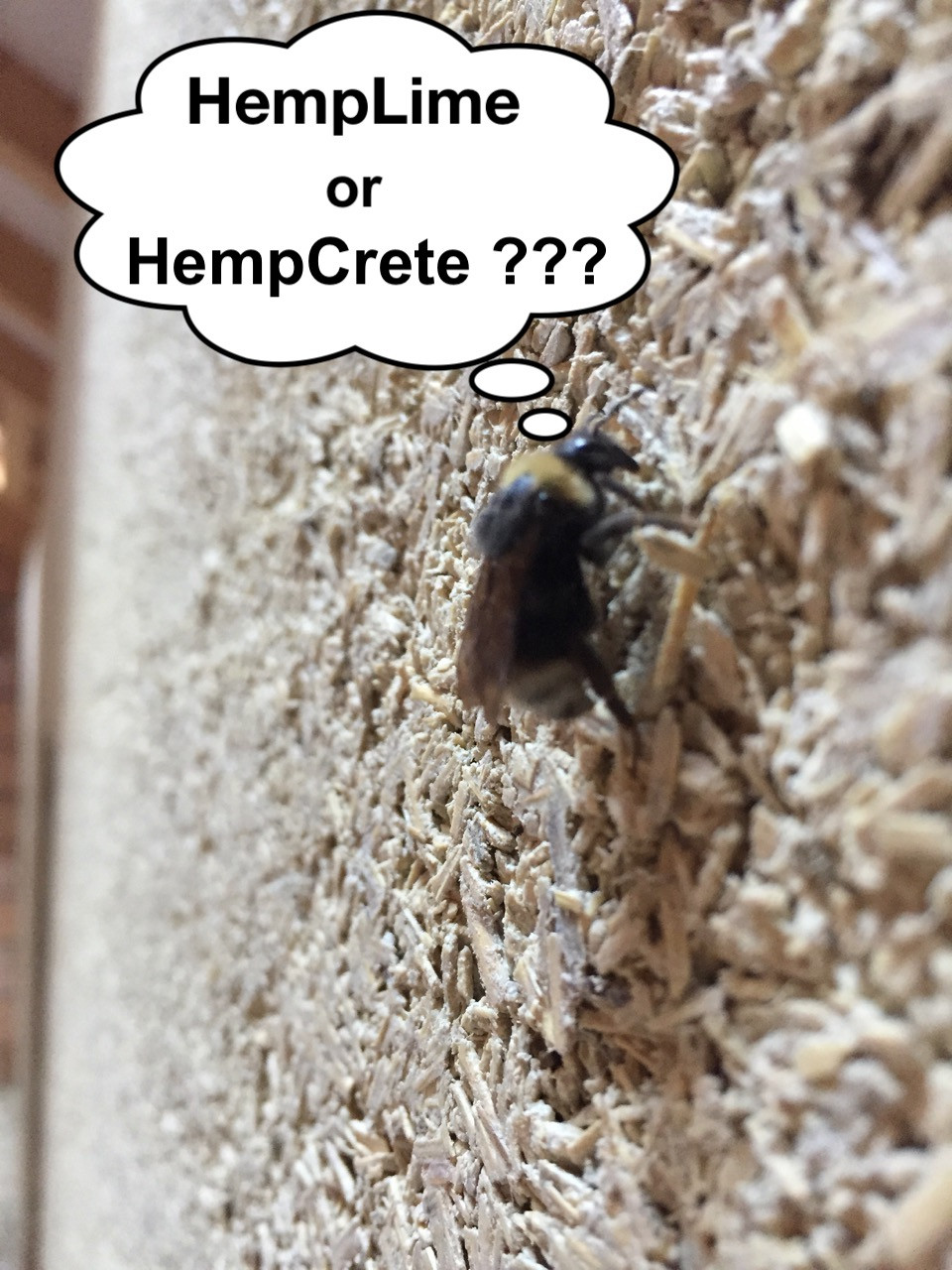 A HES-mix HempLime wall with a bee visitor