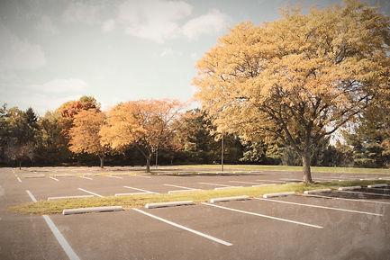 parking%20lot%20tree_edited.jpg