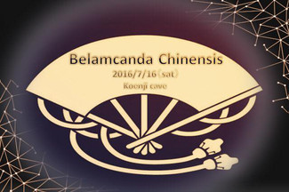 2016/7/16 Koenji cave All Stars Planning「Belamcanda chinensis」