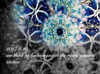 6/10 we think of hydrangea in the rainy season
