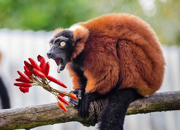 Madagascar Spice -Fragrance Oil