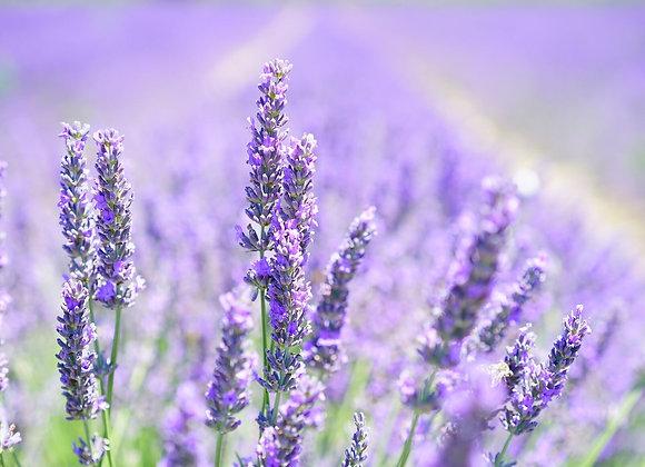 Lavender Oil - 1/2 fl oz