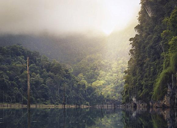 Rain Forest -Fragrance Oil