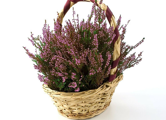 Country Heather -Fragrance Oil