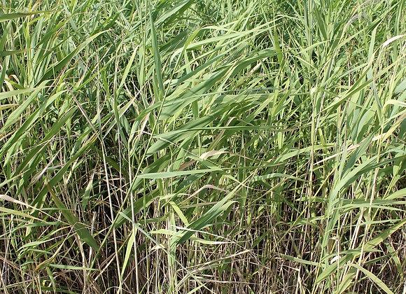 AUSTRALIAN BAMBOO GRASS Incense Stick