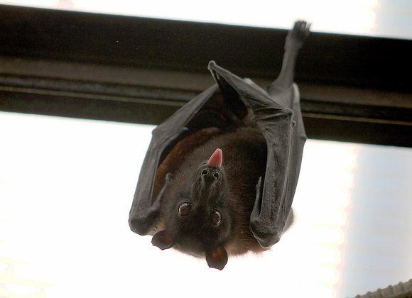 Bats Blood Ink
