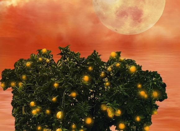 Mystic Orange Moonstone -Fragrance Oil