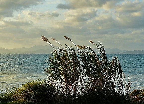 OCEAN BREEZE Incense Stick