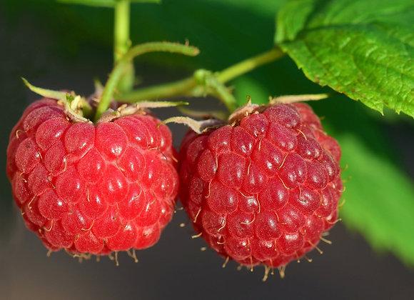 Raspberry -Fragrance Oil