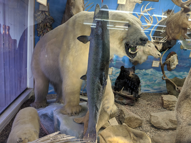 Stark's One of Kind Taxidermy Zoo