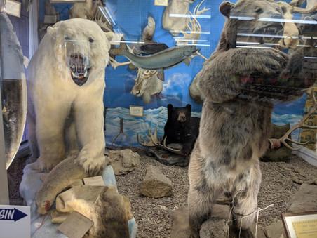 Stark's Polar Bear and Brown Bear