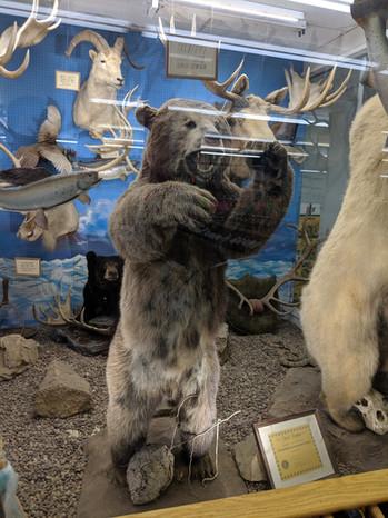 Stark's Sport Shop Bear