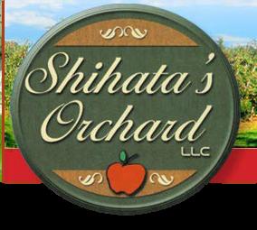 Shihata's Apple Orchard