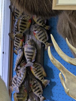 Starks Taxidermy Fish