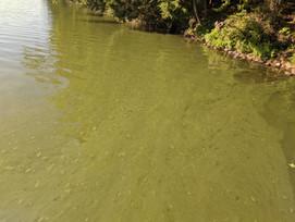 North Pond Bloom