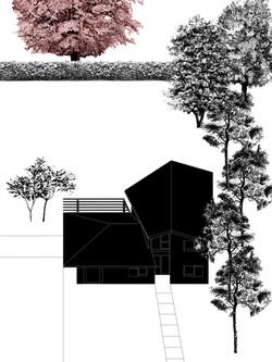 con alberi 2.jpg