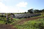 Aquaponics Hawaii | Hawaii Aquaponics | Fish Tank | Tilapia | Aquaculture