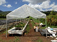 Aquaponics Hawaii | Hawaii Aquaponics | Fish Tank | Tilapia | Aquaculture