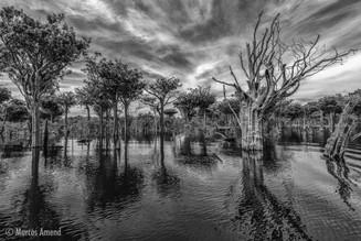 Parque Nacional do Jaú, AM