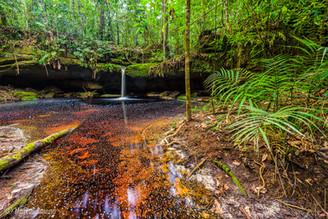 Parque Nacional do Jaú, Amazonas