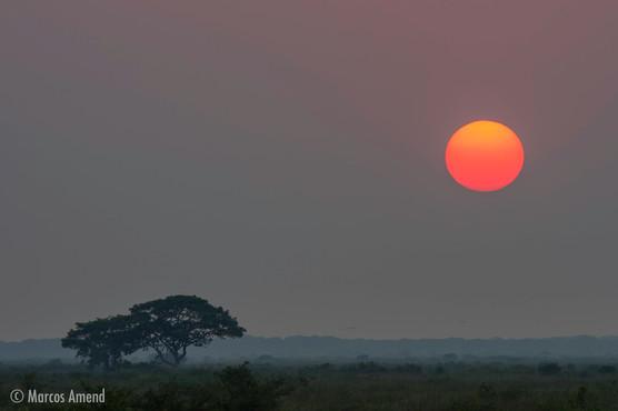 Pantanal,
