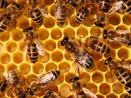 FUN FACTS ABOUT HONEY BEE'S