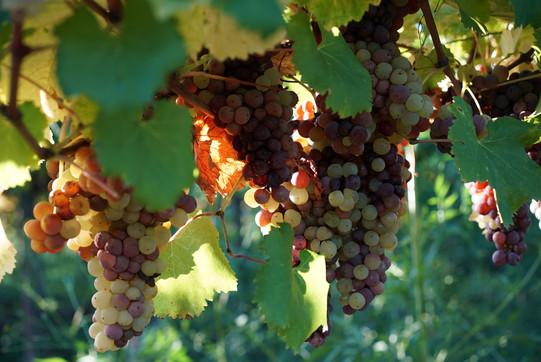 Winery_Cantina61.jpg