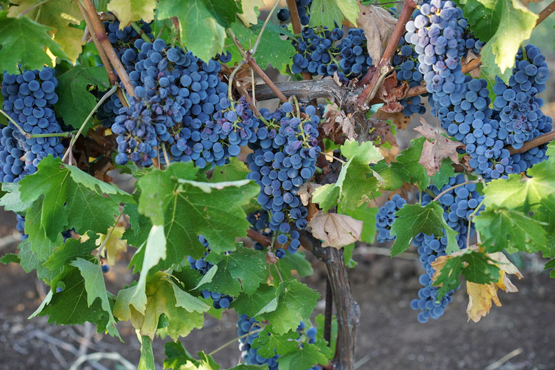 Winery_Cantina25.jpg
