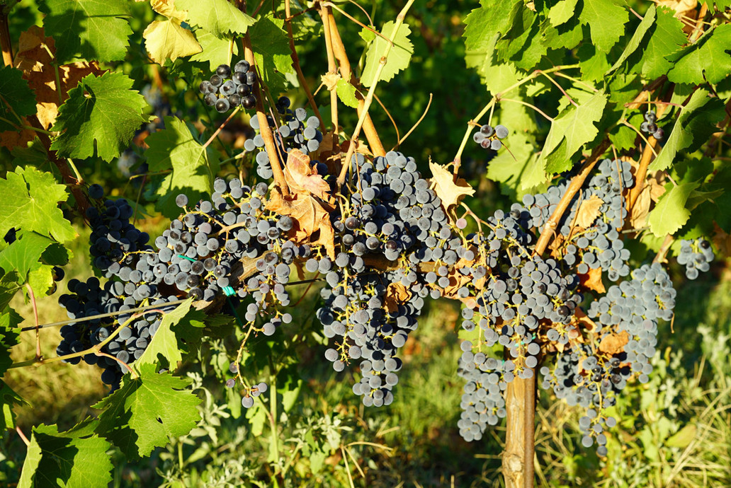 Winery_Cantina27.jpg