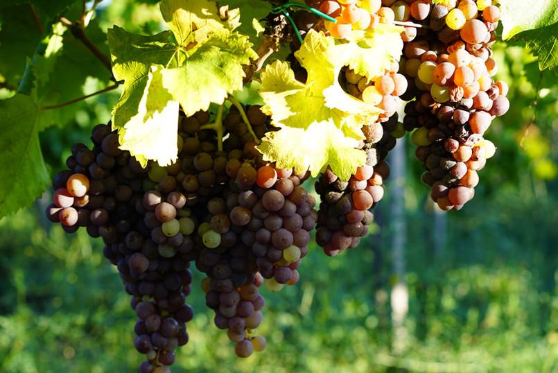 Winery_Cantina63.jpg