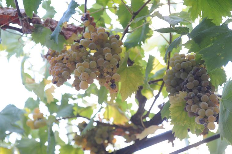 Winery_Cantina1.jpg