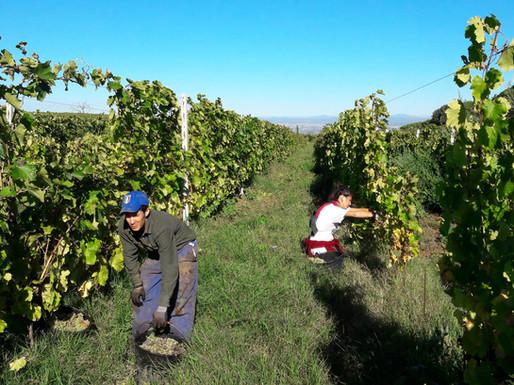 Winery_Cantina17.jpg