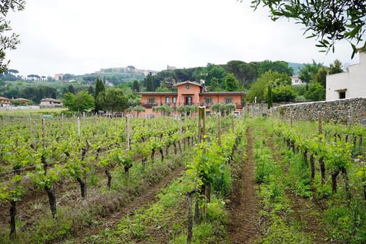 Winery_Cantina77.jpg