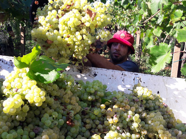 Winery_Cantina11.jpg