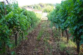 Winery_Cantina79.jpg
