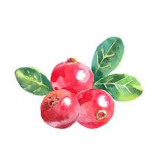 Cranberries.jpeg