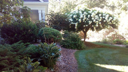 Various Plantings