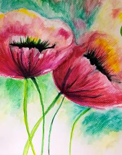 poppies watercolour