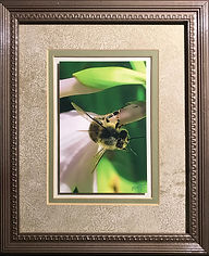 Best Bee Picture Ever!