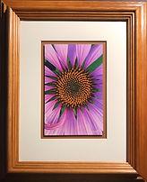 Echinechia Flower