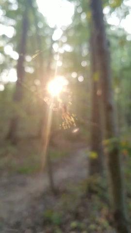 Meditative Moment: Spiderweb in the Sun