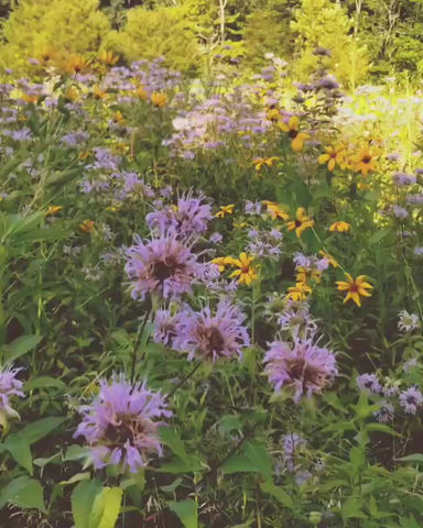 Meditative Moment: In the Meadow