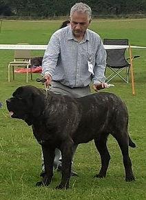 Best+Dog+Frank.jpg