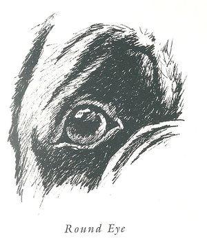 Eyes+-+Round+poppy+eye (1).jpg