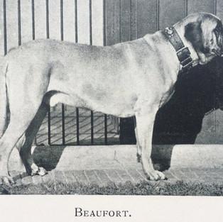 Beaufort.jpg