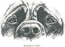 Eyes+-+Correct+eye.jpg