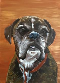 Enzo - pet portrait