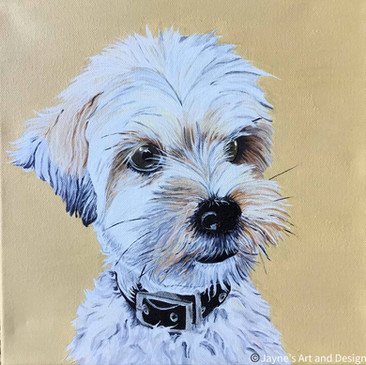 Leroy - pet portrait commission