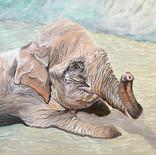 Thai Elephant - a Commission